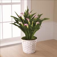 Calla Lily Planter by US Funeral Flowers