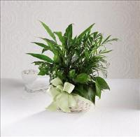 Woodland Greens™ Basket by US Funeral Flowers