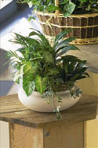 Green Garden Bowl by US Funeral Flowers
