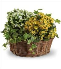 Basket of Joy by US Funeral Flowers