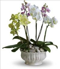 Regal Orchids by US Funeral Flowers