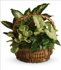 Emerald Garden Basket by US Funeral Flowers