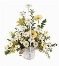 Daisies & Yellow Gerberas by US Funeral Flowers